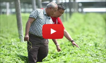 Video: Hsu Ginseng