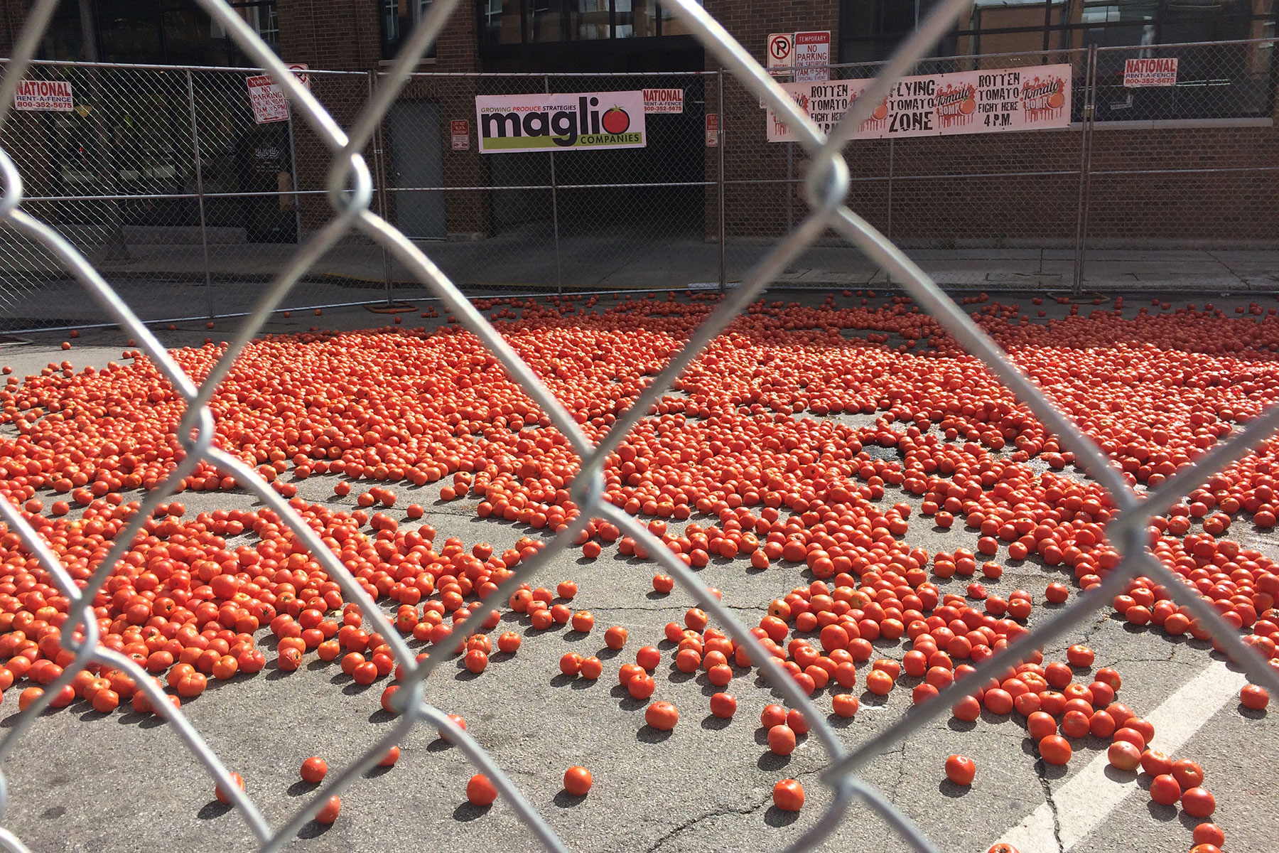 091216_tomato-romp-fights-to-end-hunger-in-east-side-community_004
