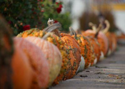 102916_pumpkinsnorth_0057