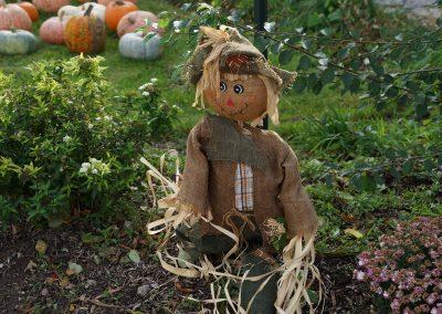102916_pumpkinsnorth_0085