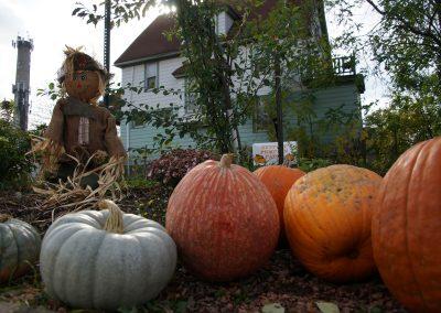 102916_pumpkinsnorth_0095