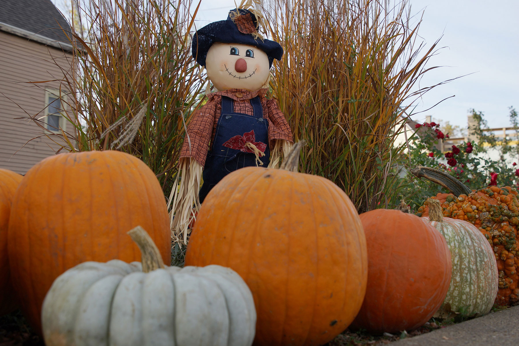 102916_pumpkinsnorth_0134