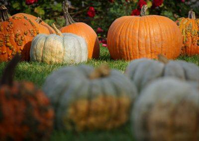 102916_pumpkinsnorth_0185