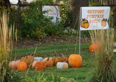 102916_pumpkinsnorth_0278