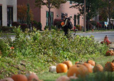 102916_pumpkinsnorth_0386