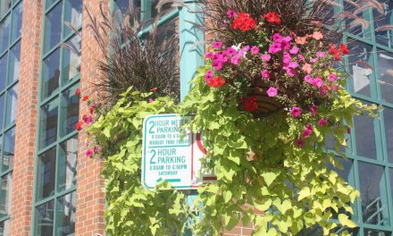 """Color the Square"" initiative to raise funds for floral facelift of Cathedral Square"