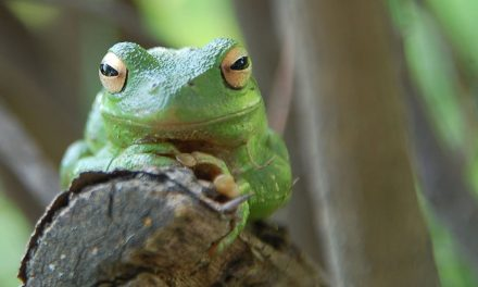 Reptile Day offers guidelines for amphibian-friendly yards