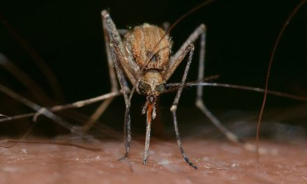 Health Department reports Mosquitos test positive again this year for West Nile Virus