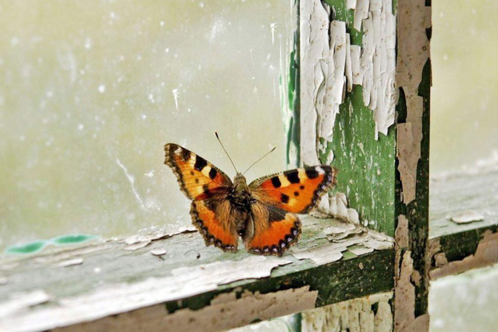 00_070618_butterflypark_01x