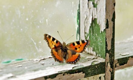 On Broken Windows and Spreading Wings: Breathing Life into Butterfly Park