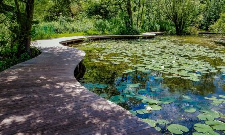 Schlitz Audubon raises $500K for stormwater management of Nature Center's wetlands