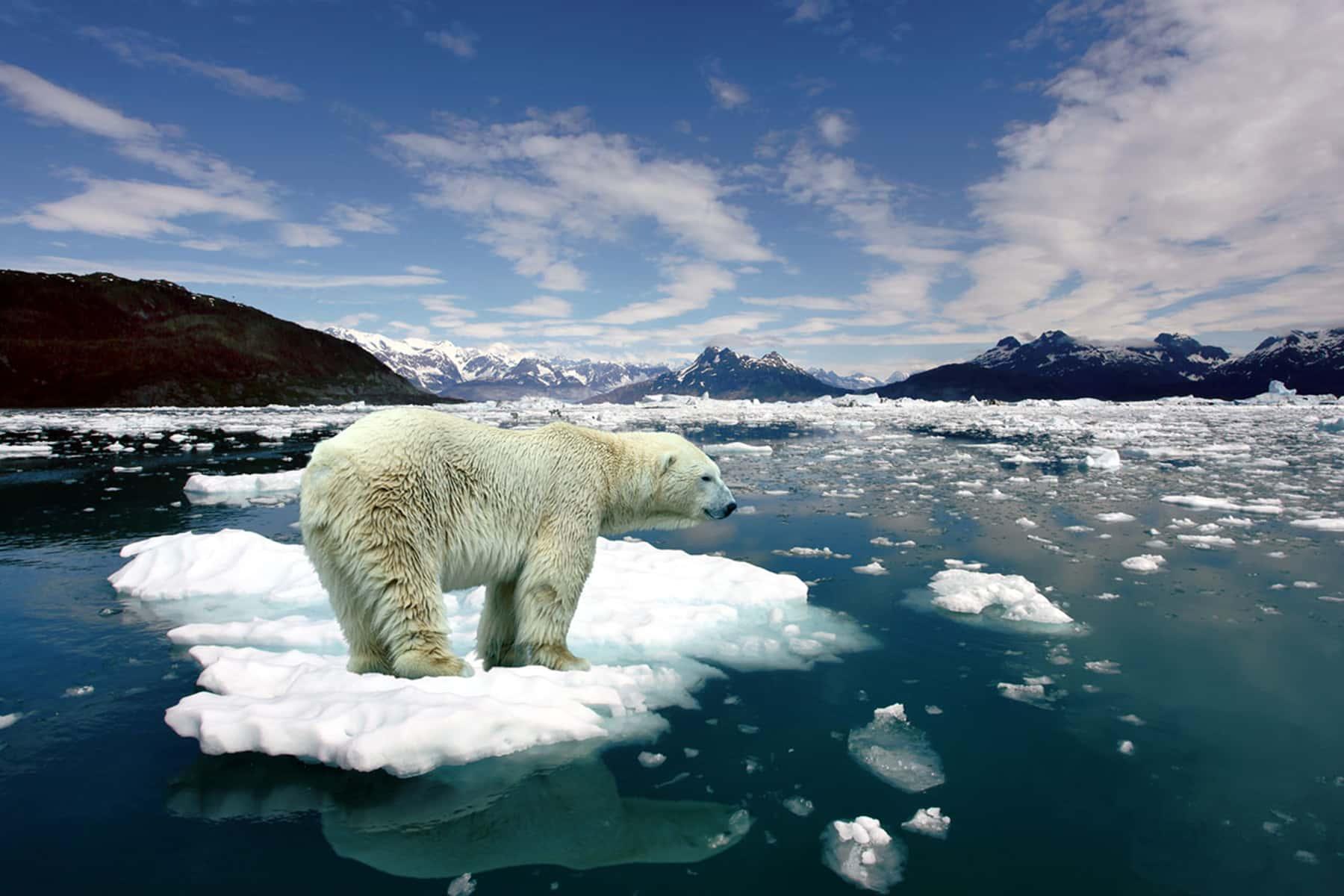 012919_polarbearicemeltwarming_01