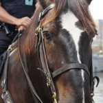 New home of MKE Urban Stables to combine mounted police with equine-assisted therapy