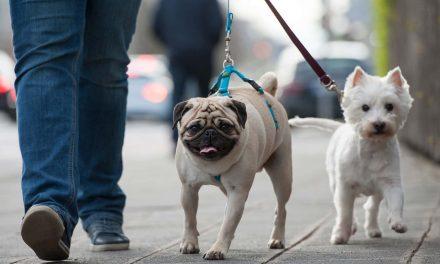 New study identifies how pets enforce boundaries of racial segregation in neighborhoods