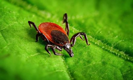 Staying Safe Outdoors: Lyme disease symptoms and other summer illnesses could be mistaken for COVID-19