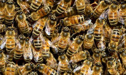 Bee the Change combats social stigmas