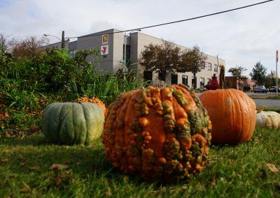 102916_pumpkinsnorth_0033