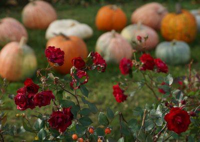 102916_pumpkinsnorth_0074