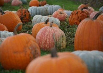 102916_pumpkinsnorth_0198