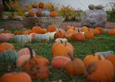 102916_pumpkinsnorth_0252