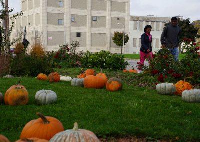 102916_pumpkinsnorth_0378