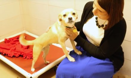 Jill Kline: Humane Society's community impact for pet owners