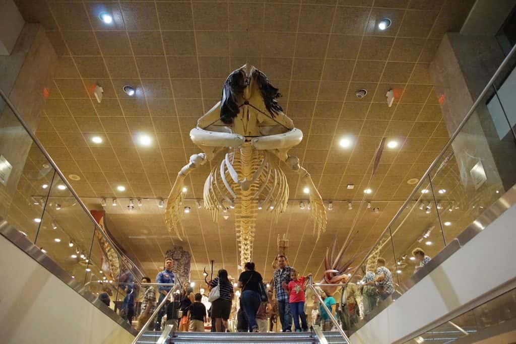 00_081217_publicmuseum_755