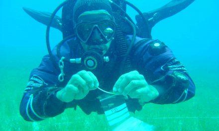 Biologist Filipe Alberto awarded $2.8M grant for bioenergy kelp study