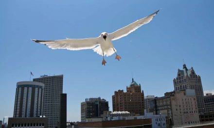 With Fiserv Forum noted as first Avian-Friendly Arena, birds can continue dive bombing people