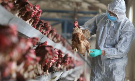Public Health: Wisconsin's scientific role in H5N1 flu research remains contentious