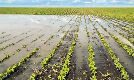 Local crop yields and food supplies remain at risk from destructive impact of climate change