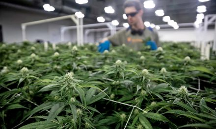 Big Cannabis: Billions up for grabs as states move to legalize marijuana
