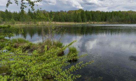 Freshwater in Peril: An all-out assault on basic safeguards that protect local resources