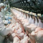 Forward Latino joins civil rights complaint against harmful workplace polices by meatpacking industry