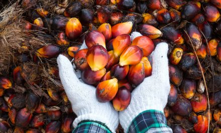 From slavery to skin care: How palm oil became the most hated crop and most used source of fat