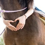 Philanthropic grant allows MKE Urban Stables to offer equine therapy programs to local community